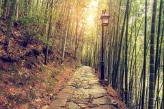 Trajeto de pedra molhado na floresta de bambu Fotos de Stock
