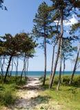 Trajeto de Sandy ao mar Fotografia de Stock