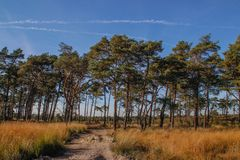 Trajeto de Sandy através de uma floresta conífera em um dia ensolarado brilhante fotos de stock