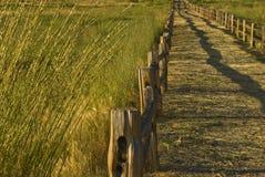 Trajeto do campo de trigo Fotografia de Stock