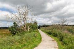 Trajeto do ciclo no parque nacional holandês com campos e pantanais fotografia de stock royalty free