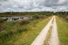 Trajeto do ciclo no parque nacional holandês com floresta e pantanais fotos de stock