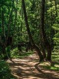 Trajeto do enrolamento na floresta na luz do sol fotografia de stock royalty free