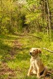 Trajeto do filhote de cachorro imagens de stock royalty free
