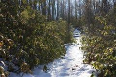 Trajeto do inverno Fotos de Stock Royalty Free