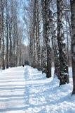 Trajeto do inverno Fotografia de Stock Royalty Free