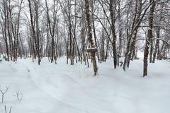 Trajeto do inverno com neve fotos de stock