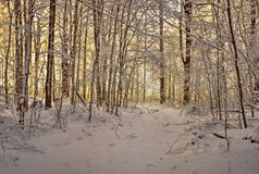 Trajeto do inverno do enrolamento fotografia de stock