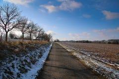 Trajeto do inverno entre árvores do campo foto de stock royalty free