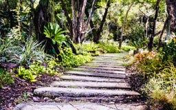 Trajeto do jardim com plantas tropicais e árvores Imagem de Stock Royalty Free