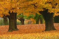 Trajeto do outono Fotos de Stock Royalty Free