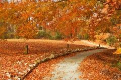 Trajeto do outono Fotografia de Stock Royalty Free