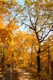 Trajeto do outono Foto de Stock Royalty Free