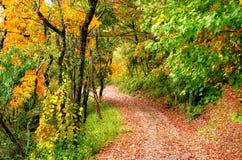 Trajeto do outono Imagem de Stock