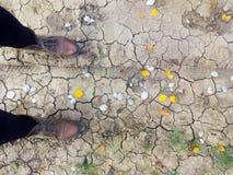 Trajeto do outono, botas rachadas da terra e do ` um s da mulher Imagem de Stock