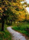 Trajeto do outono - Dinamarca Imagem de Stock