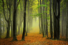 Trajeto do outono na floresta Foto de Stock Royalty Free
