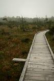 Trajeto do pântano Imagem de Stock