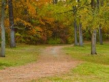 Trajeto do pé da floresta do país Imagem de Stock Royalty Free