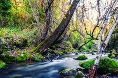 Trajeto do rio de Majaceite entre o EL Bosque e Benamahoma foto de stock royalty free