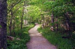 Trajeto do verão nas madeiras Fotografia de Stock