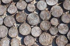 Trajeto dos cuspes de uma árvore, fundo Imagem de Stock Royalty Free