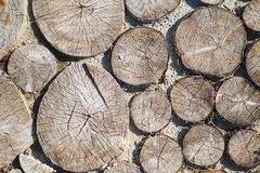 Trajeto dos cuspes de uma árvore, fundo Fotos de Stock Royalty Free