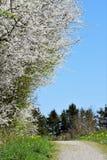 Trajeto e árvores Fotografia de Stock