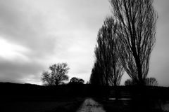 Trajeto e árvores Foto de Stock Royalty Free