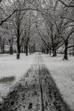 Trajeto e árvores nevados imagem de stock