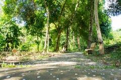 Trajeto e banco em um parque tropical bonito Fotografia de Stock Royalty Free