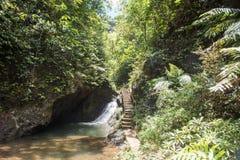 Trajeto e cachoeira da floresta úmida imagens de stock
