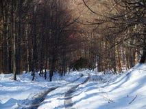 Trajeto e traços na floresta de madeira desolada em montanhas de Beskid Fotografia de Stock Royalty Free