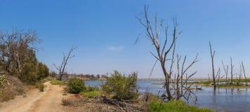 Trajeto em pantanais do pântano Fotografia de Stock Royalty Free