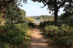 Trajeto em Richmond Park, Londres imagem de stock