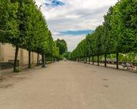 Trajeto em um parque com as árvores verdes nos lados imagens de stock royalty free