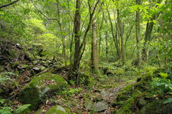 Trajeto em uma floresta coberta com o musgo Fotos de Stock
