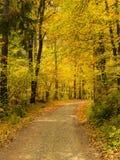 Trajeto em uma floresta no outono - Baviera fotos de stock royalty free