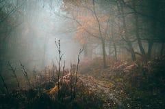 Trajeto embora uma floresta nevoenta bonita do outono na floresta do decano fotografia de stock