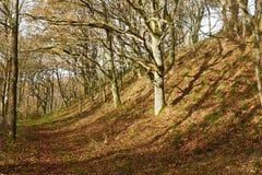 Trajeto entre carvalhos na floresta em Flyndersoe, Dinamarca Fotos de Stock Royalty Free