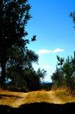 Trajeto entre o cultivo verde-oliva, campo italiano com céu azul Imagens de Stock Royalty Free