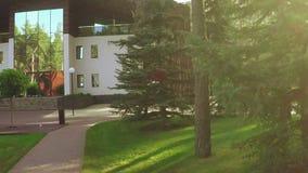 Trajeto entre pinhos no parque vídeos de arquivo