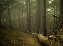 Trajeto escurecido nevoento que conduz através das árvores desencapadas de uma floresta imagens de stock
