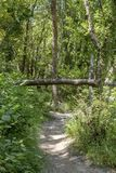 Trajeto estreito na floresta perto do rio fotografia de stock royalty free