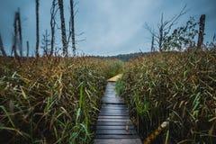 Trajeto estreito pequeno através do junco em um lago imagens de stock royalty free