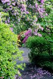 Trajeto Flowery Imagens de Stock
