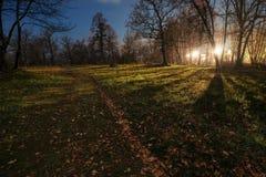 Trajeto gramíneo na noite com a luz que vem através das árvores Imagem de Stock Royalty Free