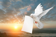 Trajeto levando de Livro Branco e de grampeamento da pomba foto de stock