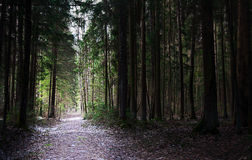 Trajeto leve em uma floresta escura foto de stock