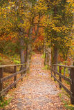Trajeto longo através da floresta colorida Fotografia de Stock